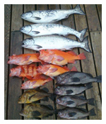 Ketchikan Charter Fishing
