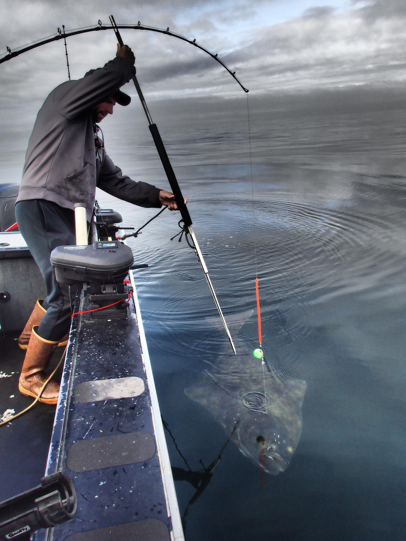 Ketchikan ak halibut fishing charters for Halibut fishing in ketchikan